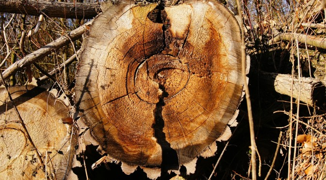 Référenceur en bois.