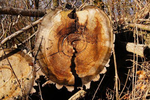 Permanence téléphonique pour référenceur en bois